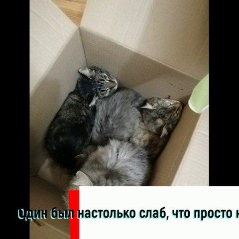 Живодер выбросил 14 кошек из окна. Женщина спасла котят