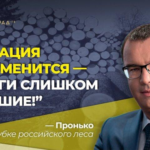 """""""Ситуация не изменится - деньги слишком большие!"""" Пронько о вырубке российского леса"""